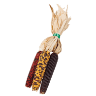 Indian Mini Corn