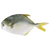 Golden Pompano Fish, Frozen