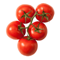 Organic Red Tomato on the Vine