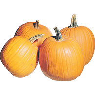 Colossal Pumpkin