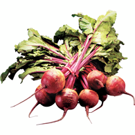 Red Beets, Bunched