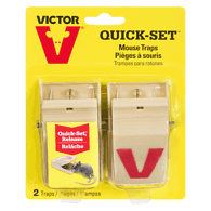 Quick Set Mouse Trap