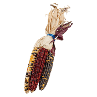 Indian Corn, Large