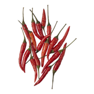 Red Hot Thai Peppers