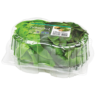 Naked Leaf Boston Lettuce, Green